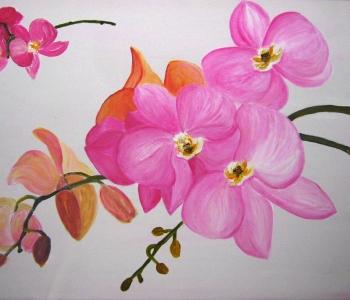 orchidee-verschiedene-farbe
