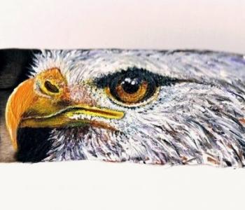 2-Botschaft-Adler